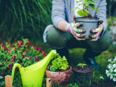Avviso 18 – Addetto al Giardinaggio e Ortofrutticoltura