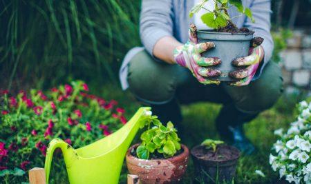 Iscrizioni aperte – Addetto al Giardinaggio e Ortofrutticoltura